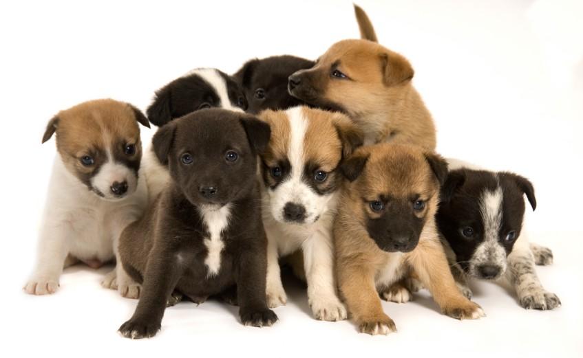 Adopt-A-Puppy